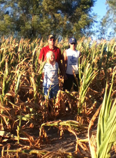 Photo of a father and his two children standing in a corn field damaged by drought.