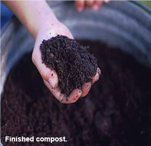Image of finished compost