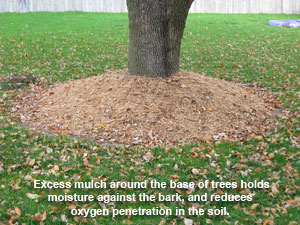 Image of excess mulch around tree base